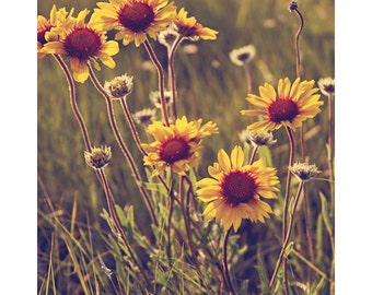 Flower, Wildflower, Nature, Landscape Photography - Suzie Q's