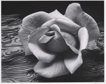 Rose and Driftwood, photograph by Ansel Adams, in various sizes