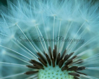 Macro dandelion photo print