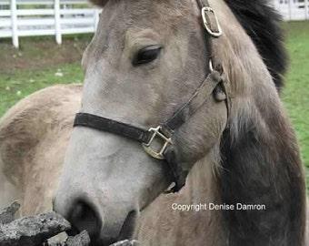 Kentucky - Kentucky horse