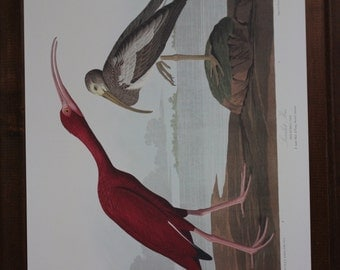 Scarlet Ibis John James Audubon Art Plate CCCXCVII to Frame or for Collage, Scrapbooking, Paper Arts, Assemblage and MORE