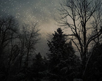 Nature Photography - Starry Night Sky in Forrest Photo, 24x36 20x30 8x10 5x7 fine art wall decor, wall art, black, blue and white sky photo