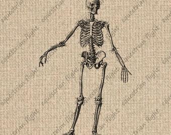 INSTANT DOWNLOAD Printable Skeleton Images Skeleton Print Skeleton Graphics Skeleton Clipart Digital Sheet Download 300dpi HQ
