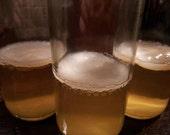 Jun SCOBY Mother Fermented Fermenting Ferment Green Tea Brew Brewing Mushroom Honey Probiotics Healthy Drink Paleo Autoimmune Protocol