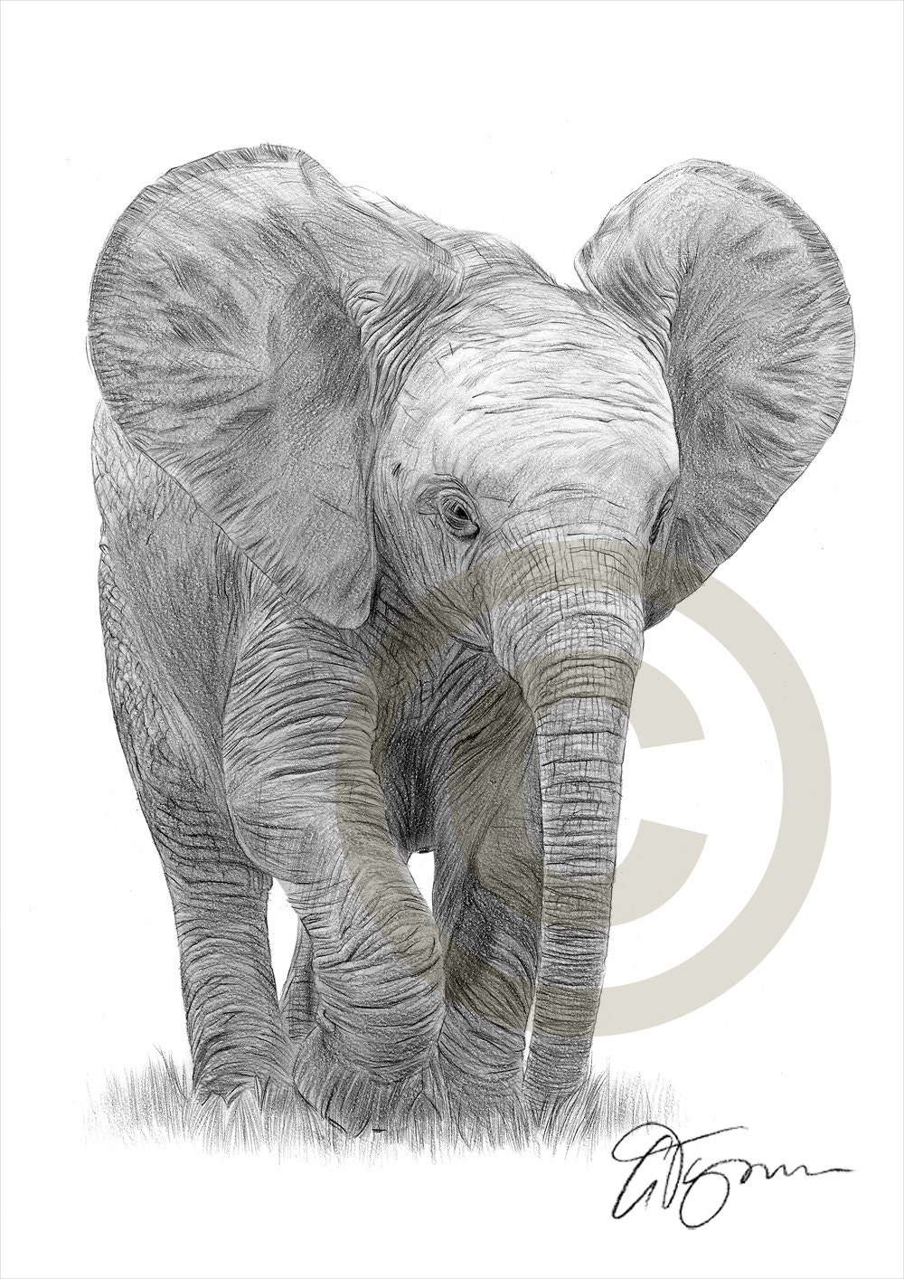 african baby elephant pencil drawing print a4 size artwork