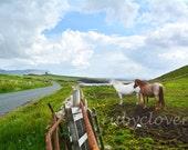 Two Horses at Mullaghmore, SLIGO, Sea View, Irish CASTLE, Country Road, Scenic Farm, IRELAND Landscape Photography, White Horse, Green Hills