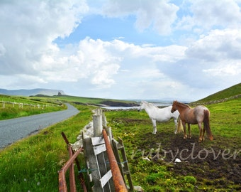 Two Horses at Mullaghmore, SLIGO, Sea View, Irish CASTLE, Country Road, Scenic Farm, IRELAND Landscape Photography, White Horse, Green Hills