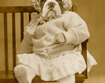 Big Baby, large original photograph of a cute and cuddly English bulldog puppy in vintage baby clothes