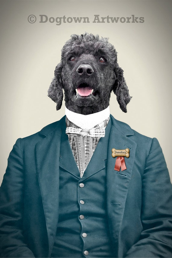 Smokey, large original photograph of gray standard poodle dressed in vintage outfit