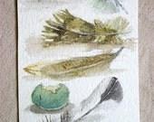 Feather Bird Eggs Nature Art Watercolor Wildlife Illustration Original