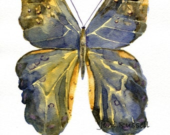 Caligo Beltrao (Owl Butterfly), original watercolor