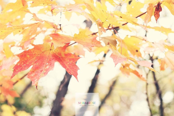 Fall Light- Fine Art Photography 5x7 by Alana Gillett- Autumn Maple Leaf Trees Fall Bokeh Citrine Mustard Peach Red