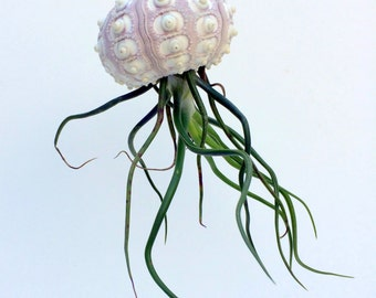 Large Sputnik Hanging Sea Urchin Planter Single