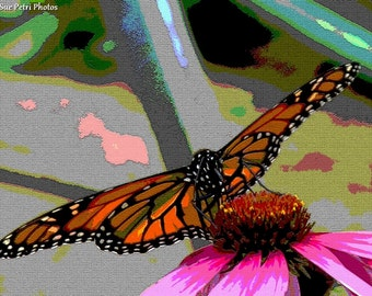 Monarch Butterfly, Photographic Art, Animal Photography, Macro Photography, Romantic Decor, Butterfly, Butterfly Photos, Orange, Black