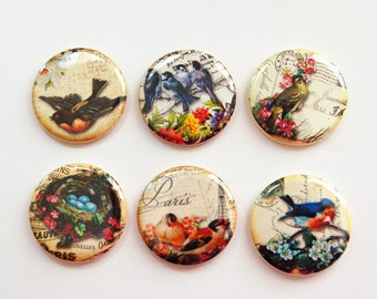 Bird Magnets, Nature magnets, button magnets, Birds, Flowers, Birds Nest, Kitchen Magnets, stocking stuffer (3290)
