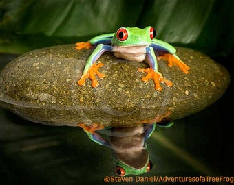 Tree Frog Art, Frog on Rock in Pond, Frog Art