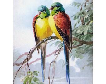 Bird Fabric Block | Lovebirds Parrots Conjures | Repro Catherine Klein