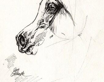 Arabian horse original pen drawing