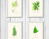 Printable fern collection wall art green white instant download 8,5 x 11 inch jpeg 4 ferns