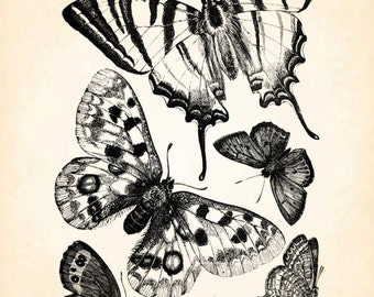 Butterfly Group Cluster Variety Vintage Printable Image INSTANT Download Digital Antique Clip Art Transfer Art Print jpg jpeg pdf png V22