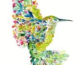 Mohala hummingbird - wate...