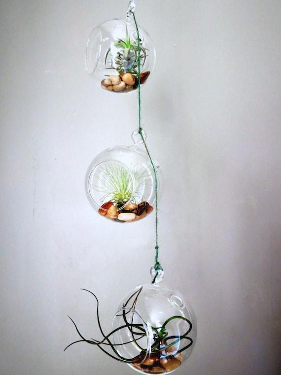 Hanging Air Plant Terrarium Set Of Three Round Globes