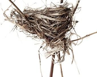 Original Fine Art Photograph of Chestnut-Sided Warbler nest by Mark Tomalty