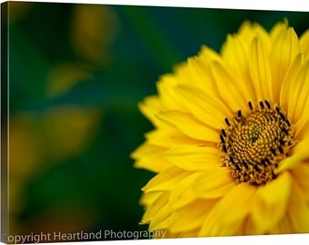 Large Canvas Art, Oversized Photo Canvas, Extra Large Art, Yellow Daisy Photo, Nature Photography, Yellow and Green, Garden Flowers