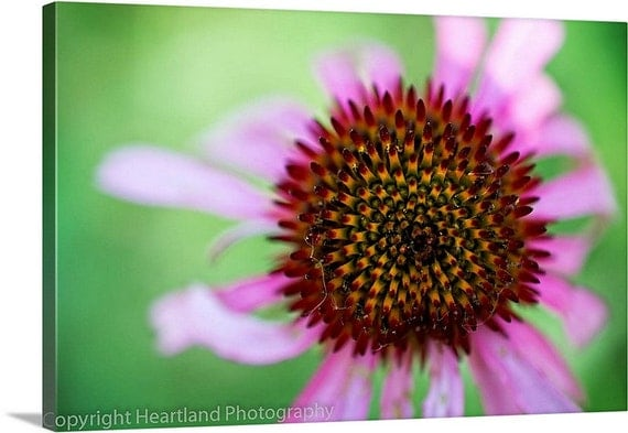 Large Photo Canvas, Nature Photography, Big Canvas Wall Art, Purple and Green, Large Flower Art, Fine Art Canvas, Large Wall Art, Big Canvas