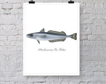 "Merluccius on Hake Fish Poster Print, Illustration Print , Premium Wall Art Decor, Minimalist Print 13"" x 19"""