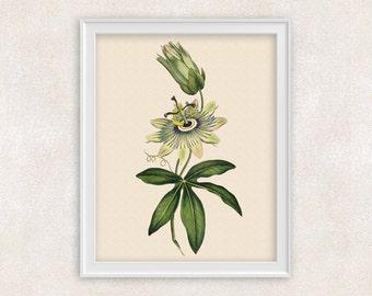 Passion Flower Botanical Print - 8x10 White Flower Art - Wall Art Prints - Antique Prints - Home Decor - Botanical Art Print -  Item #139