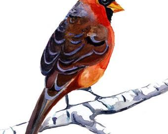Red Cardinal watercolor painting print / bird art print  8x10