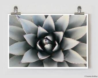 Cactus Marfa Fine Art Photography Print