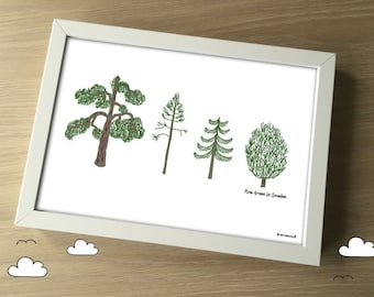 Pine Trees in Sweden - A4 Hand Drawn Illustration Print - swedish pines - nordic evergreens - scandi illustration