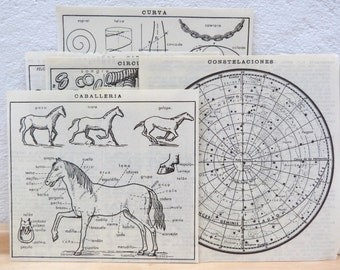 10 Spanish dictionary clippings BY LETTER - Original pictures from 1930s - Dictionaries cut outs illustrations