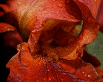 Abstract Flower, Red Iris Photo, Red Floral Abstract photo, Red Nature Photo Art, Abstract Red Play with Fire Iris, Macro Floral Photo Art