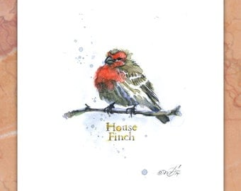 House Finch signed giclee print