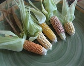 MINI Indian CORN Ornamental EARS dried flower and herb bunches