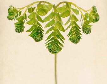Botanical Print, Maidenhair Fern Print, Nature Wall Decor, Botanical Wall Art, Fern Art Print, Woodland Art