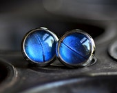 Real Butterfly Wing Earrings Blue Morpho  Silver Finish Post Studs
