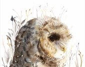 Spotted Owl- Large Archival Art Print, Owl art