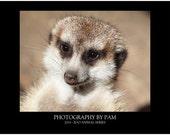 2014 Wall Calendar - Zoo Animal Series
