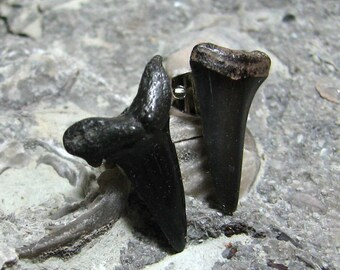 Real Fossil Shark Stud Earrings by Tanja Sova