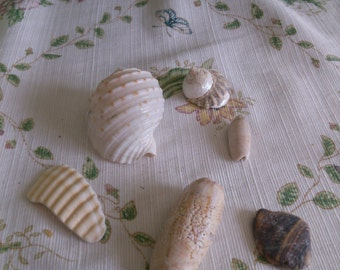 Mixed Shells for Collecting and Display or Jewelry Making