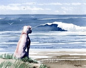 WHITE BOXER At The BEACH Art Print Signed by Watercolor Artist D J Rogers
