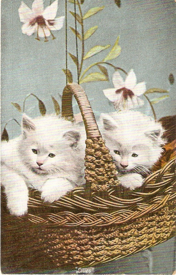 Adorable Fluffy White Kittens in Basket by sharonfostervintage