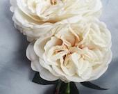 Garden Rose Wedding Hair Ivory Bloom Bridal Hair Rose Fascinator