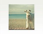 Wire Fox Terrier Dog Photograph - Hello My Friend