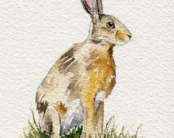 Watercolour sketch - Hare no. 1