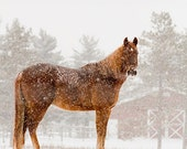 Horse in the Snow Photography, Horse Photo, Horse Picture, Picture of Horse in Snow, Winter Horse Landcape